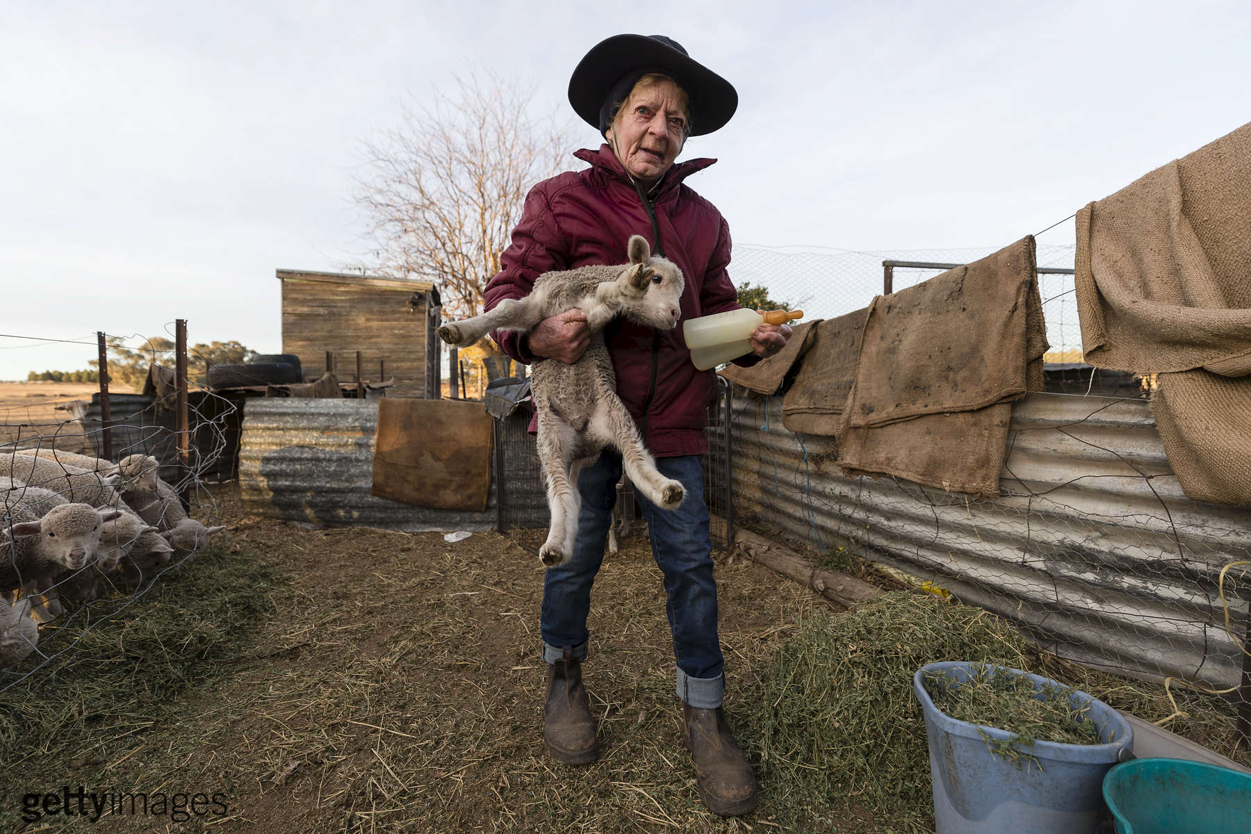 COONABARABRAN , NEW SOUTH WALES - JUNE 20:  ' Coral Jerry, 80, is pictured on the family farm 'Marlborough', 40 km outside Coonabarabran. Coral lives on the farm alone after her husband of 55 years passed away in 2015. She is currently raising 40 orphaned lambs on her own (feeding them 4-5 times a day) while her son Garry, wife Tanya and son Brett run the farm. The New South Wales State government recently approved an emergency drought relief package of A$600m, of which at least A$250m is allocated for low interest loans to assist eligible farm businesses to recover. The package has been welcomed, though in the words of a local farmer {quote}it barely touches the sides{quote}. Now with the real prospect of a dry El-Nino weather pattern hitting the state in Spring, the longer term outlook for rain here is dire. June 20, 2018 in Coonabarabran, Australia.  (Photo by Brook Mitchell/Getty Images)