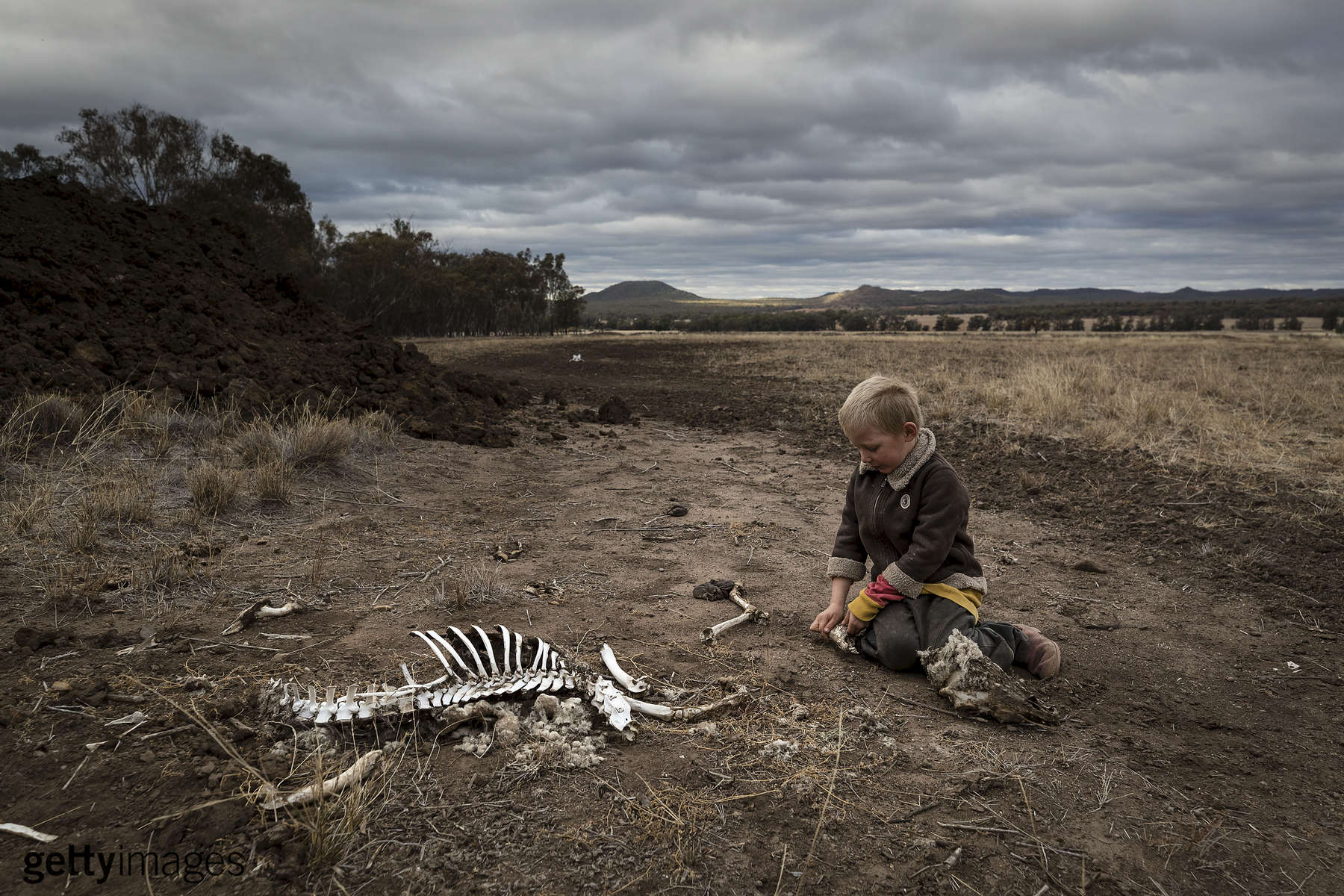 COONABARABRAN, AUSTRALIA - JUNE 17: Harry Taylor, 6, plays with the bones of dead livestock on the Taylor family farm. The Central Western region of New South Wales, Australia, farmers continue to battle a crippling drought which many locals are calling the worst since 1902. In Warrumbungle Shire, where sharp peaks fall away to once fertile farmland the small town of Coonabarabran is running out of water. The town dam is down to just 23% capacity, forcing residents to live with level six water restrictions. The New South Wales State government recently approved an emergency drought relief package of A$600m, of which at least A$250m is allocated for low interest loans to assist eligible farm businesses to recover. The package has been welcomed, though in the words of a local farmer {quote}it barely touches the sides{quote}. Now with the real prospect of a dry El-Nino weather pattern hitting the state in Spring, the longer term outlook for rain here is dire. June 17, 2018 in Coonabarabran, Australia.(Photo by Brook Mitchell/Getty Images)