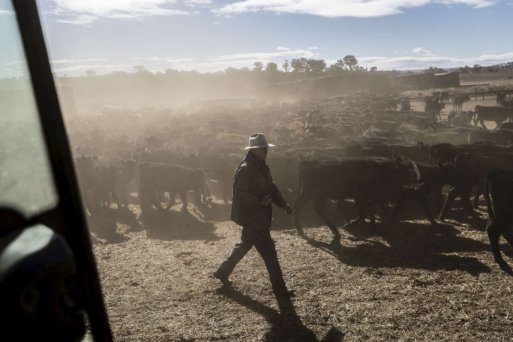 COONABARABRAN , NEW SOUTH WALES - JUNE 19:  Ambrose Doolan works with his wife Lisa on their propery outside Coonabrabran.  In the Central Western region of New South Wales, Australia, farmers continue to battle a crippling drought which many locals are calling the worst since 1902. In Warrumbungle Shire, where sharp peaks fall away to once fertile farmland the small town of Coonabarabran is running out of water. The town dam is down to just 23% capacity, forcing residents to live with level six water restrictions. The New South Wales State government recently approved an emergency drought relief package of A$600m, of which at least A$250m is allocated for low interest loans to assist eligible farm businesses to recover. The package has been welcomed, though in the words of a local farmer {quote}it barely touches the sides{quote}. Now with the real prospect of a dry El-Nino weather pattern hitting the state in Spring, the longer term outlook for rain here is dire. June 19, 2018 in Coonabarabran, Australia.  (Photo by Brook Mitchell/Getty Images)