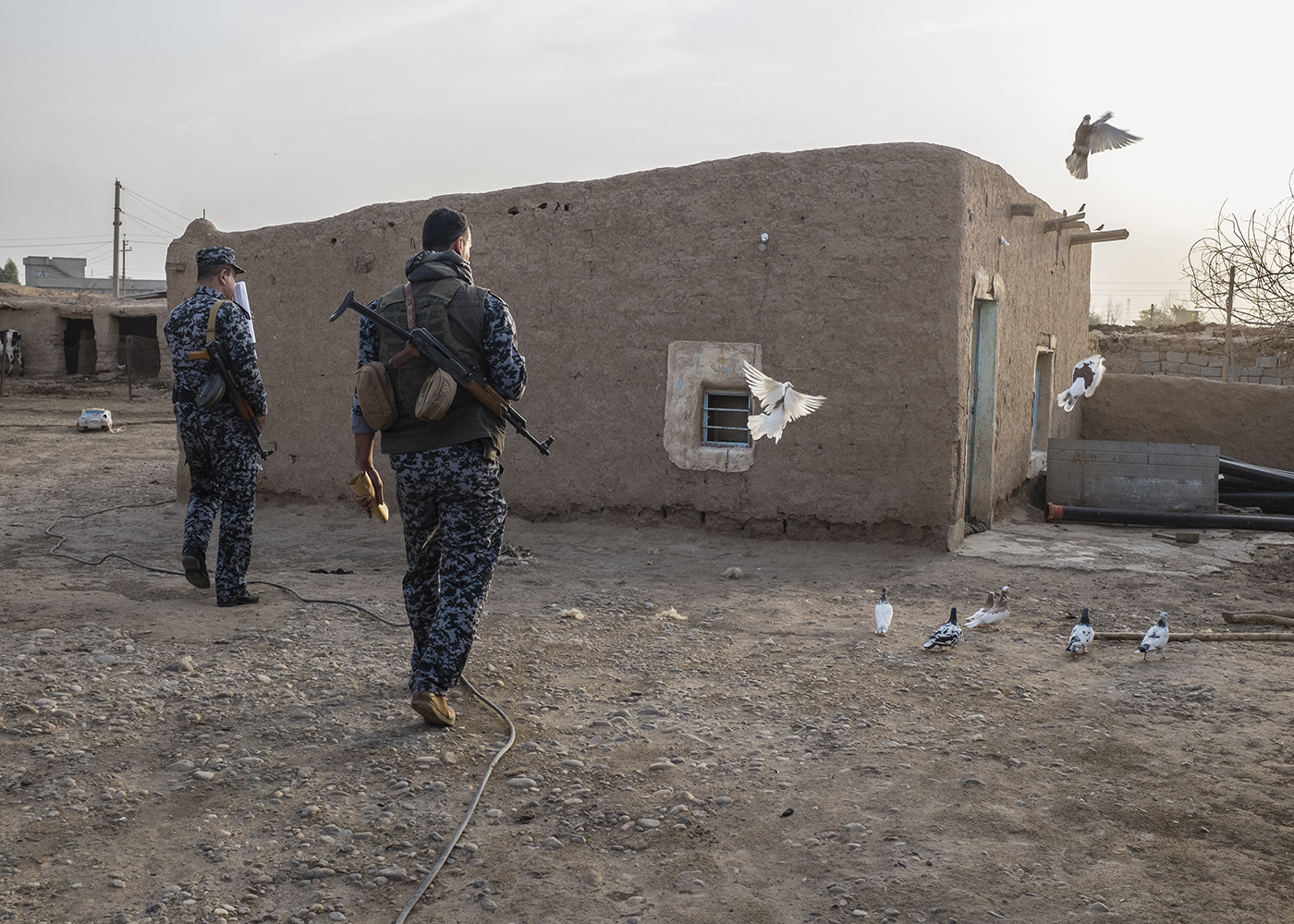 06/10/2015 -- Kirkuk-Iraq, Iraq -- Two Iraqi police inside one of the house in Mula Abdullah village with Pigeons in Mula Abdullah village in south of Kirkuk. Mula Abdullah village is the village where the first battle started between Peshmerga and ISIS.