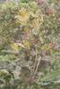 FlowerMontage_KneppR