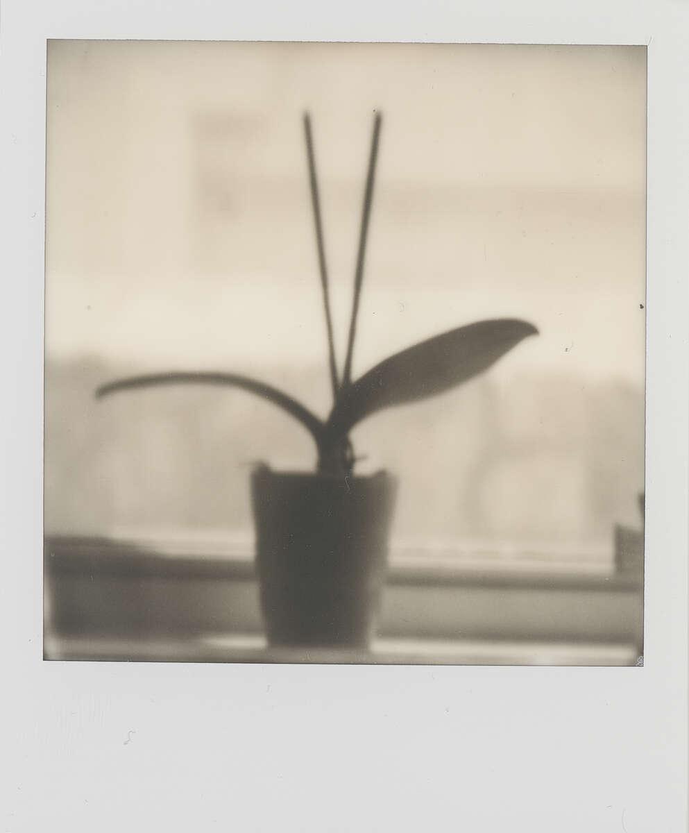Polaroid SX-70 B&W Film Scan