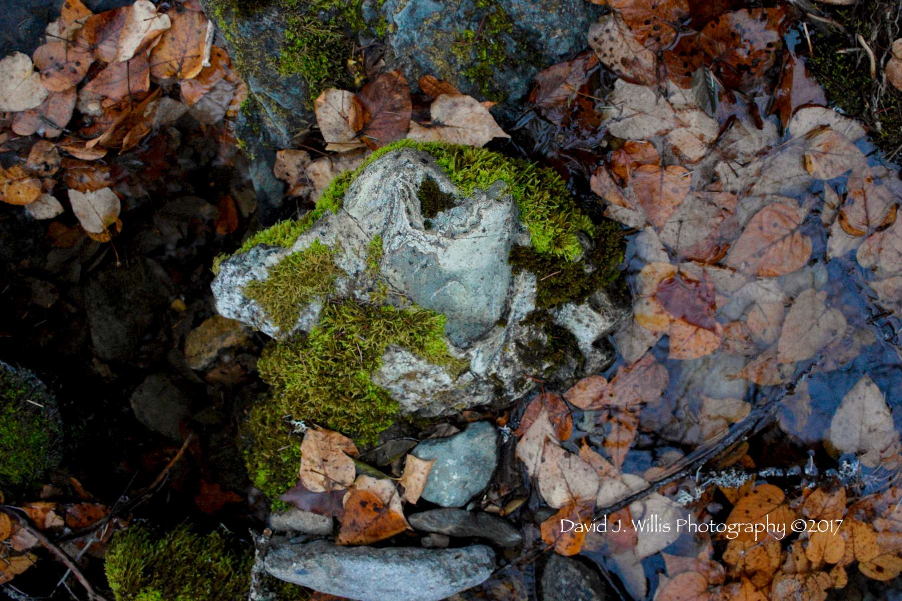 Seasonal Creek Abstract, Fall, Plumas County