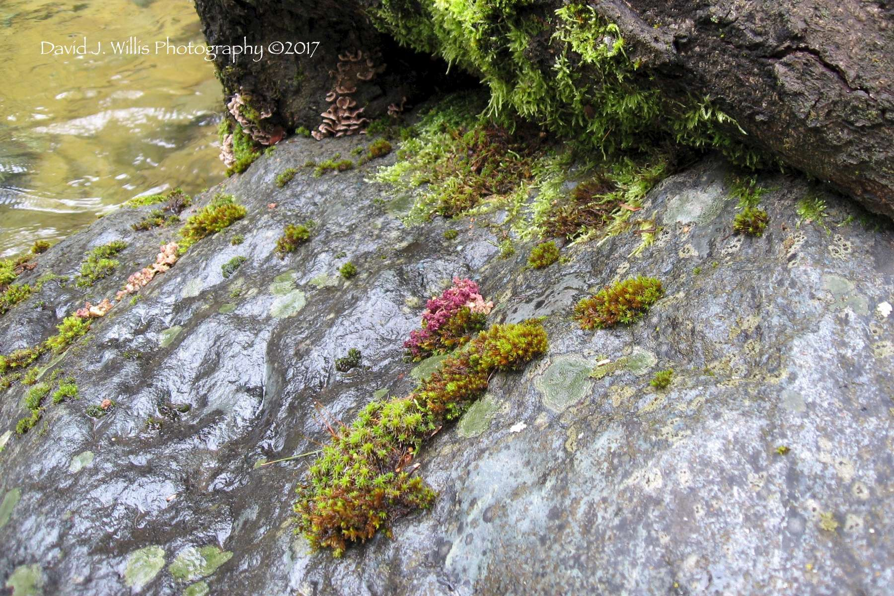 Moss and Rocks on a Seasonal Creek, Undisclosed Location, Plumas County