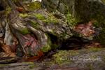 Seasonal Creek, Abstract II, Fall, Plumas County