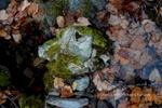 Seasonal Creek Abstract, Fall, Plumas County