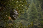 Hornet's Nest on The Feather River, Plumas County