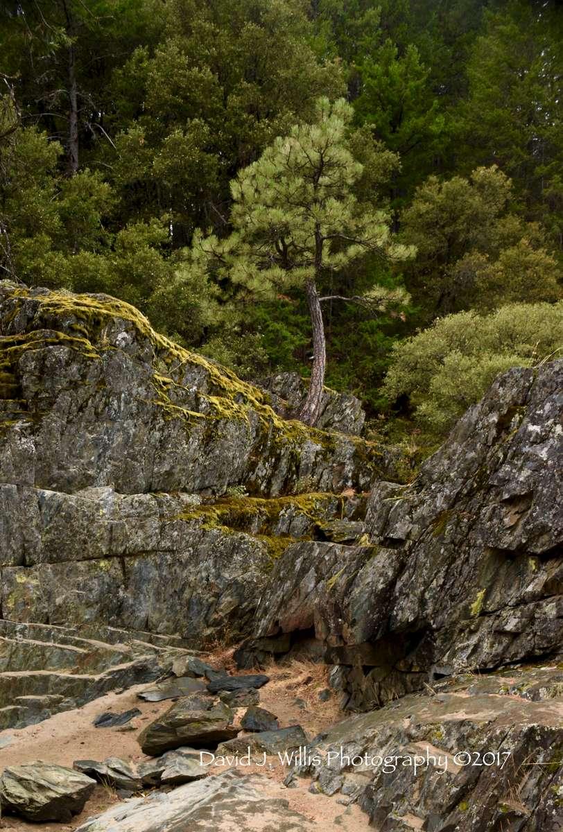 Indian Falls Bonsai, Indian Creek, Plumas County