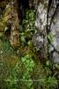 Spanish Creek,Keddie Cascades, Plumas County, Spring