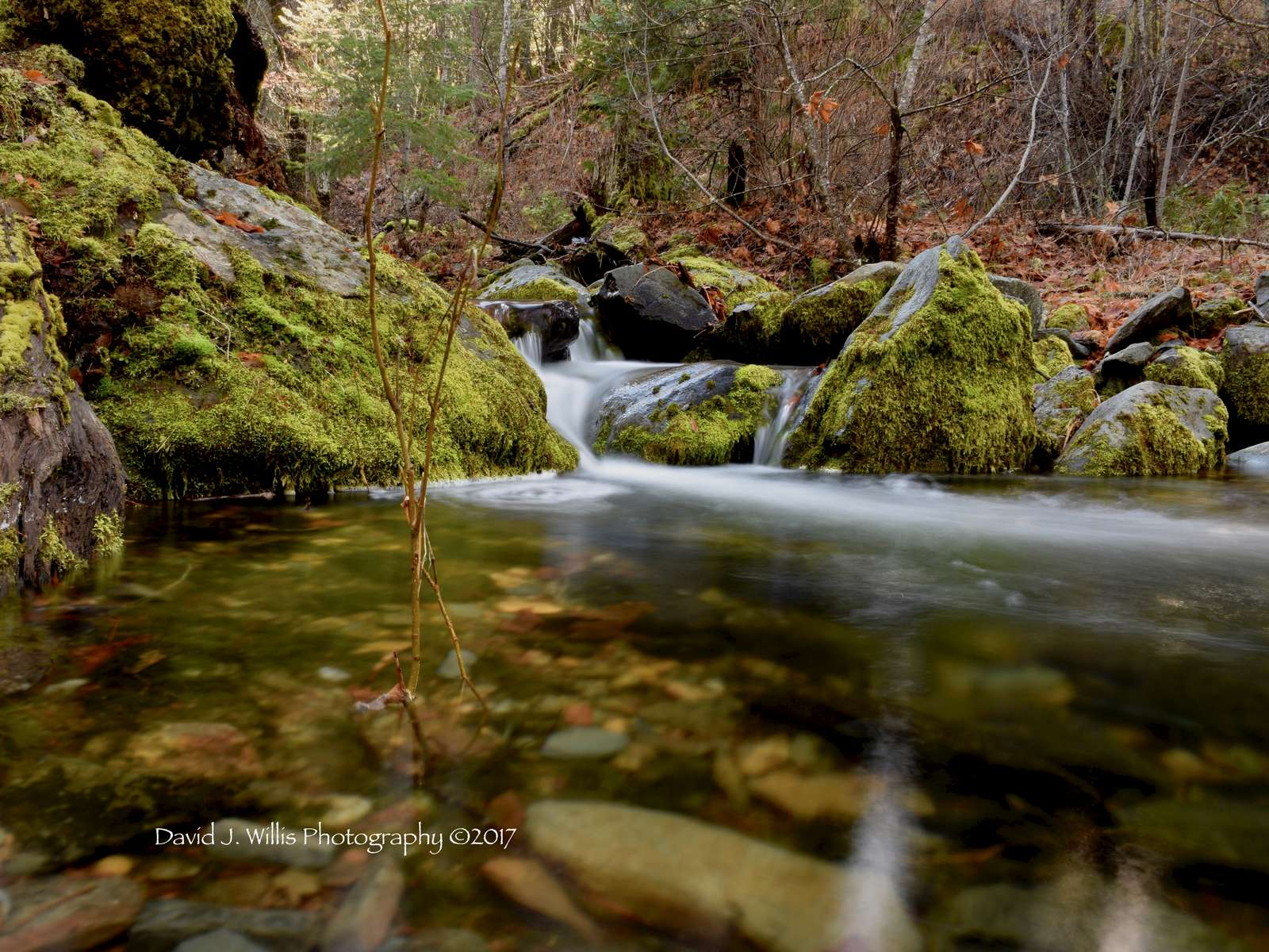 Maple Pool at Lovey's Gorge, Undisclosed Location, Plumas County