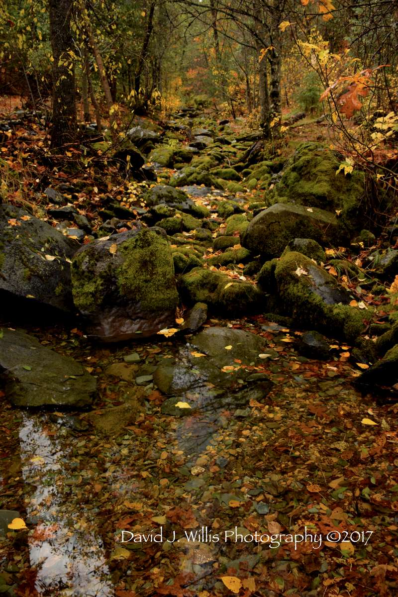 Lovey's Gorge, Undisclosed Location, Fall Leaves, Plumas County