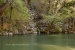 Spanish Creek, Plumas County, Spring