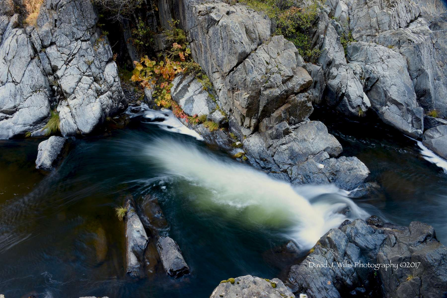 Rocks and Indian Rhubarb, Keddie Cascades, Spanish Creek, Fall, Plumas County