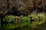 Rock Wall , Indian Rhubarb, Indian Creek, Fall, Plumas County