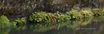 Rock Wall, Indian Rhubarb, Indian Creek, Fall 1:3 , Plumas County