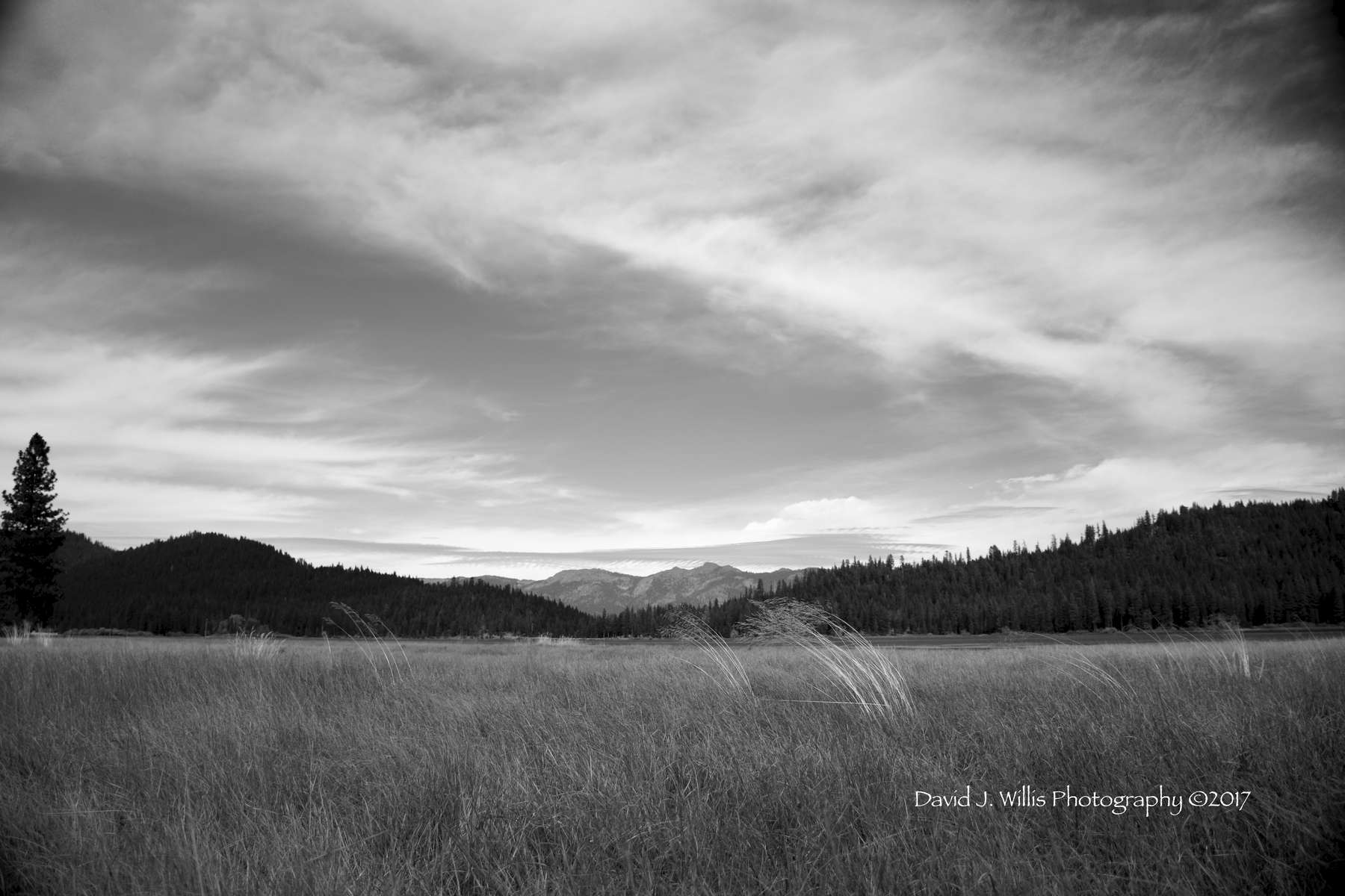 Round Valley Resevoir, Windblown Grasses, Keddie Ridge, Plumas County