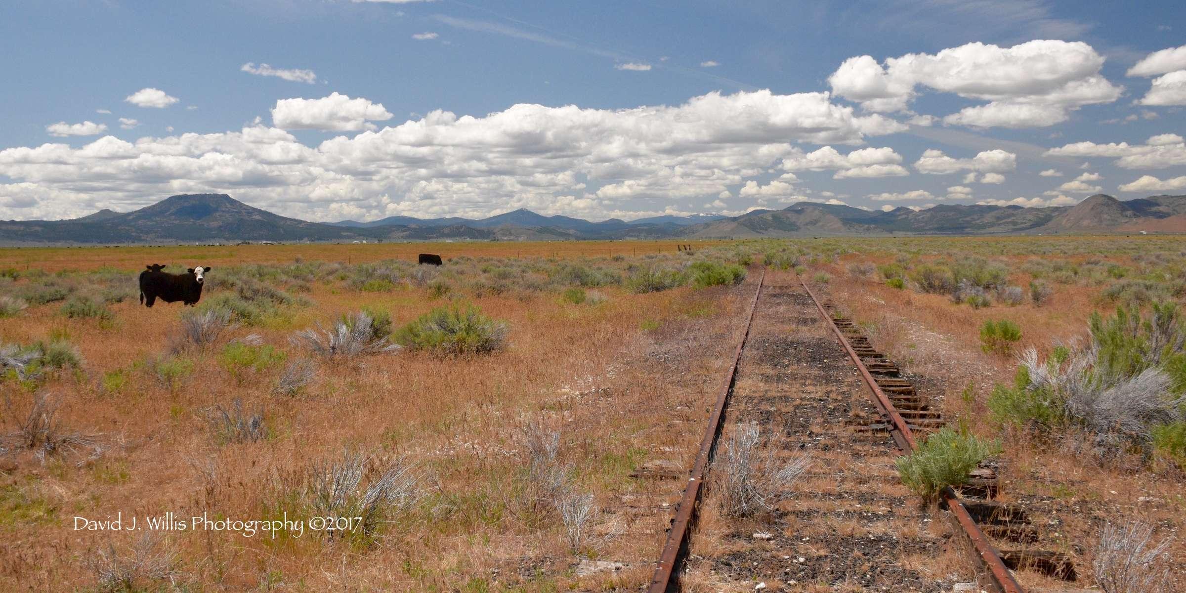 Sierra Valley, Train Tracks, Cows, Plumas County
