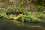 Sunlit Grass, Indian Rhubarb on Indian Creek, Fall, Plumas County