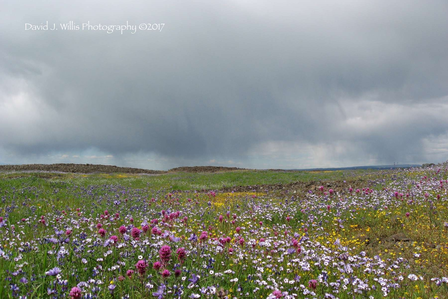 Table Mountain, Wildflowers, Spring, Butte County