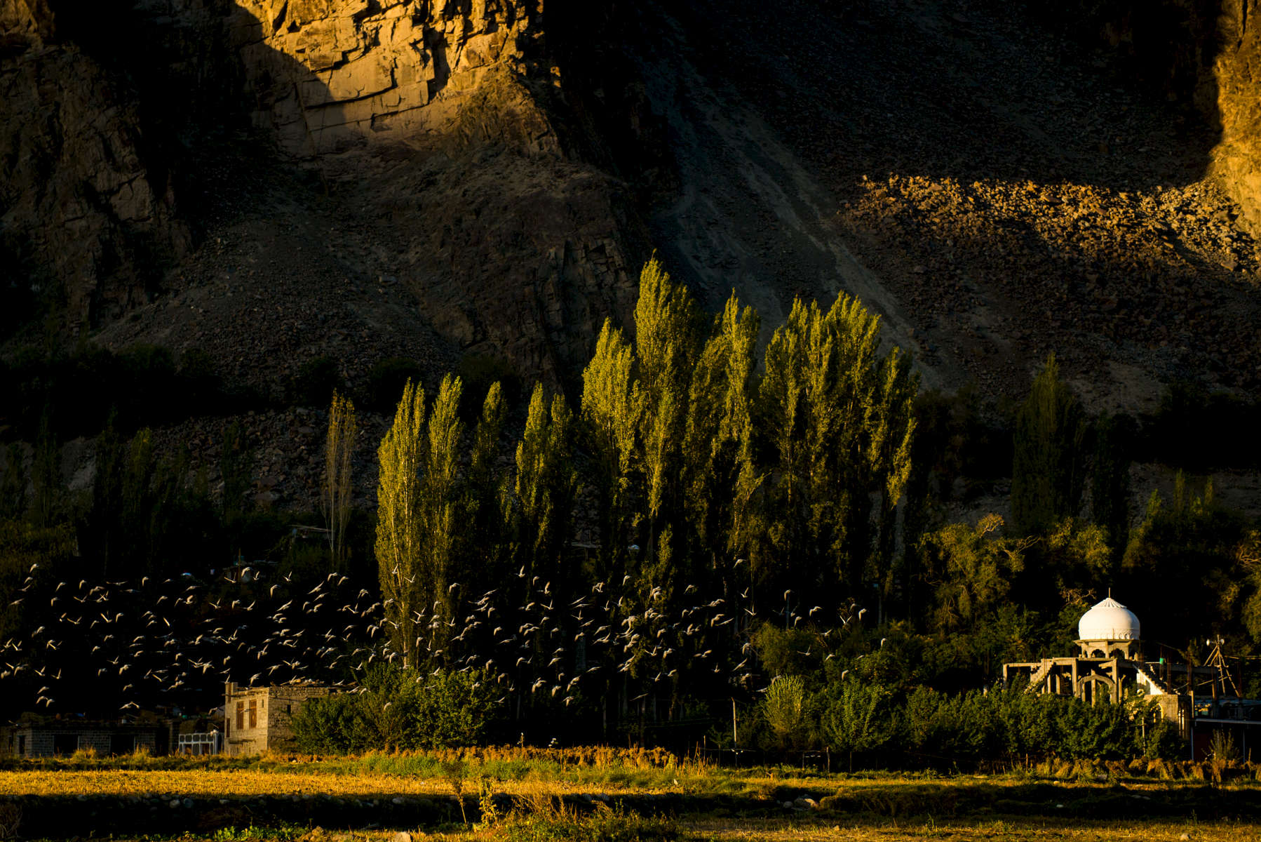 Pigeons at dawn, Turtuk, Ladakh