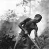 Many families in rural Haiti burn trees and branches in order to make charcoal to sell for cooking fuel. Here a man tends burning logs. Near Milot, Haiti 2004