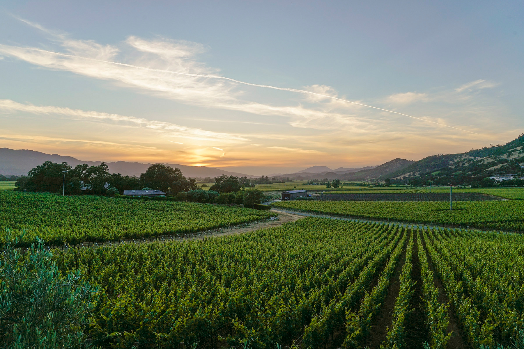NapaValley_Web_01