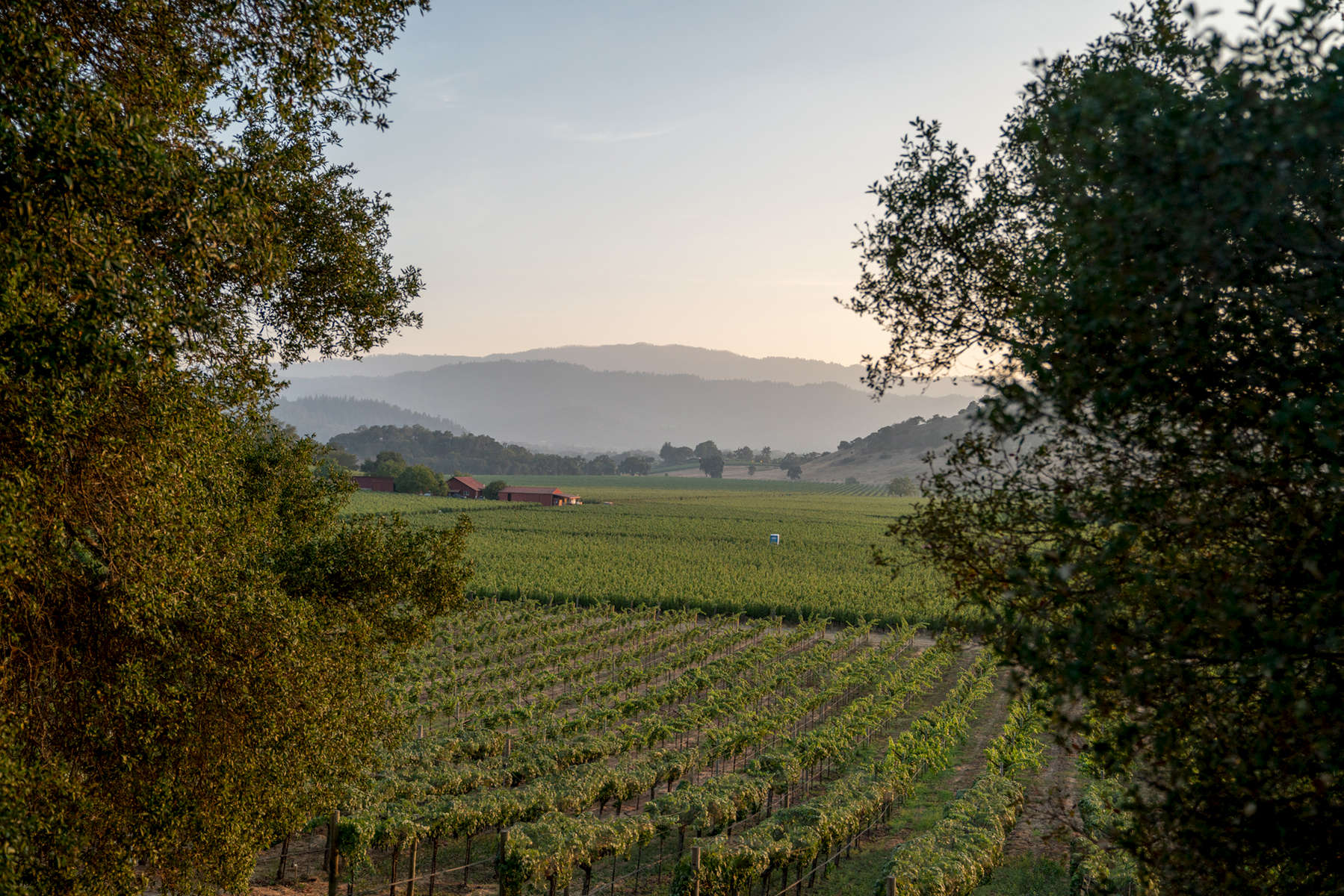 NapaValley_Web_04