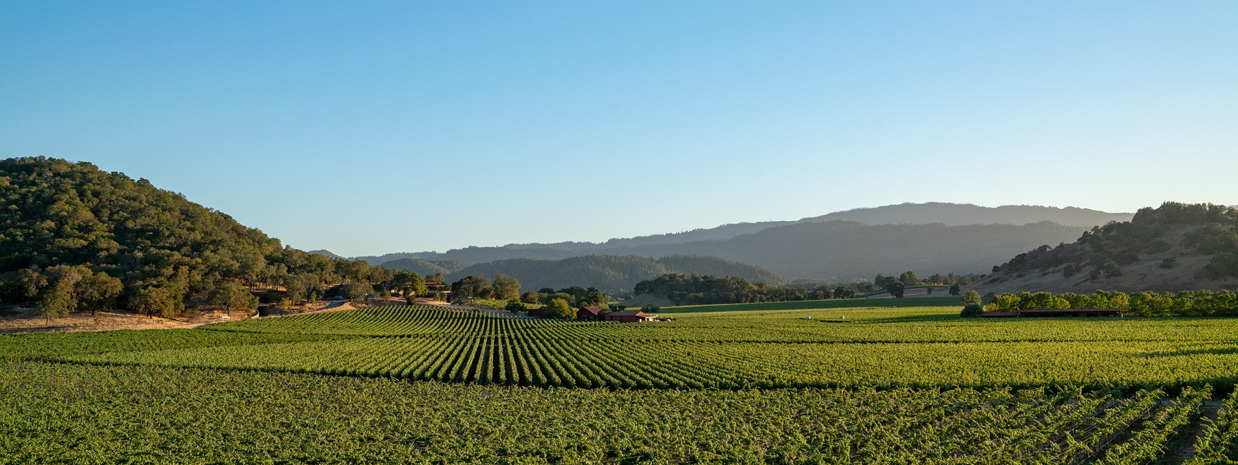 NapaValley_Web_11