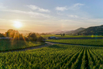NapaValley_Web_13