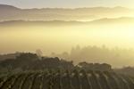 VineyardSonoma County California