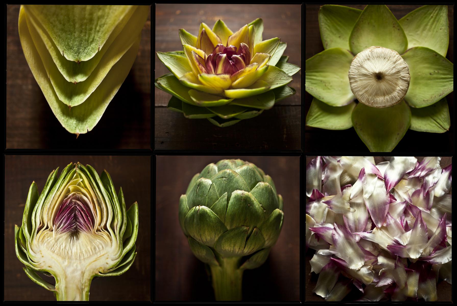 artichoke-study-food-art