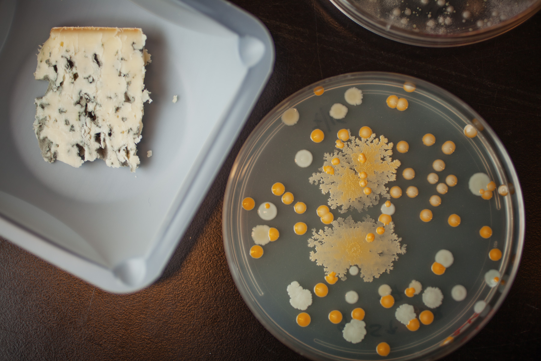bacteria-cheese-biology
