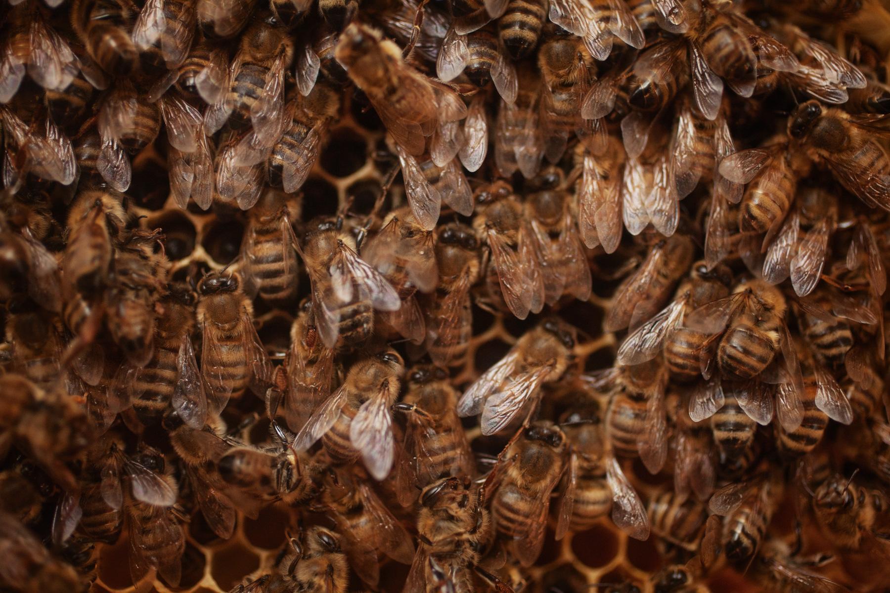 bees-hive-farm
