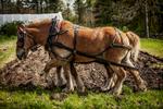 farm-horse-plow