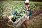 farming-photo-harvest