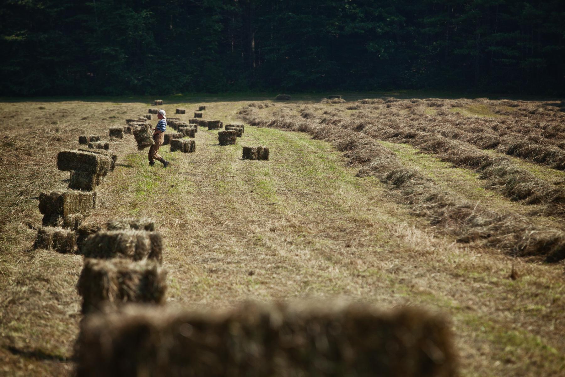 hay-field-bale