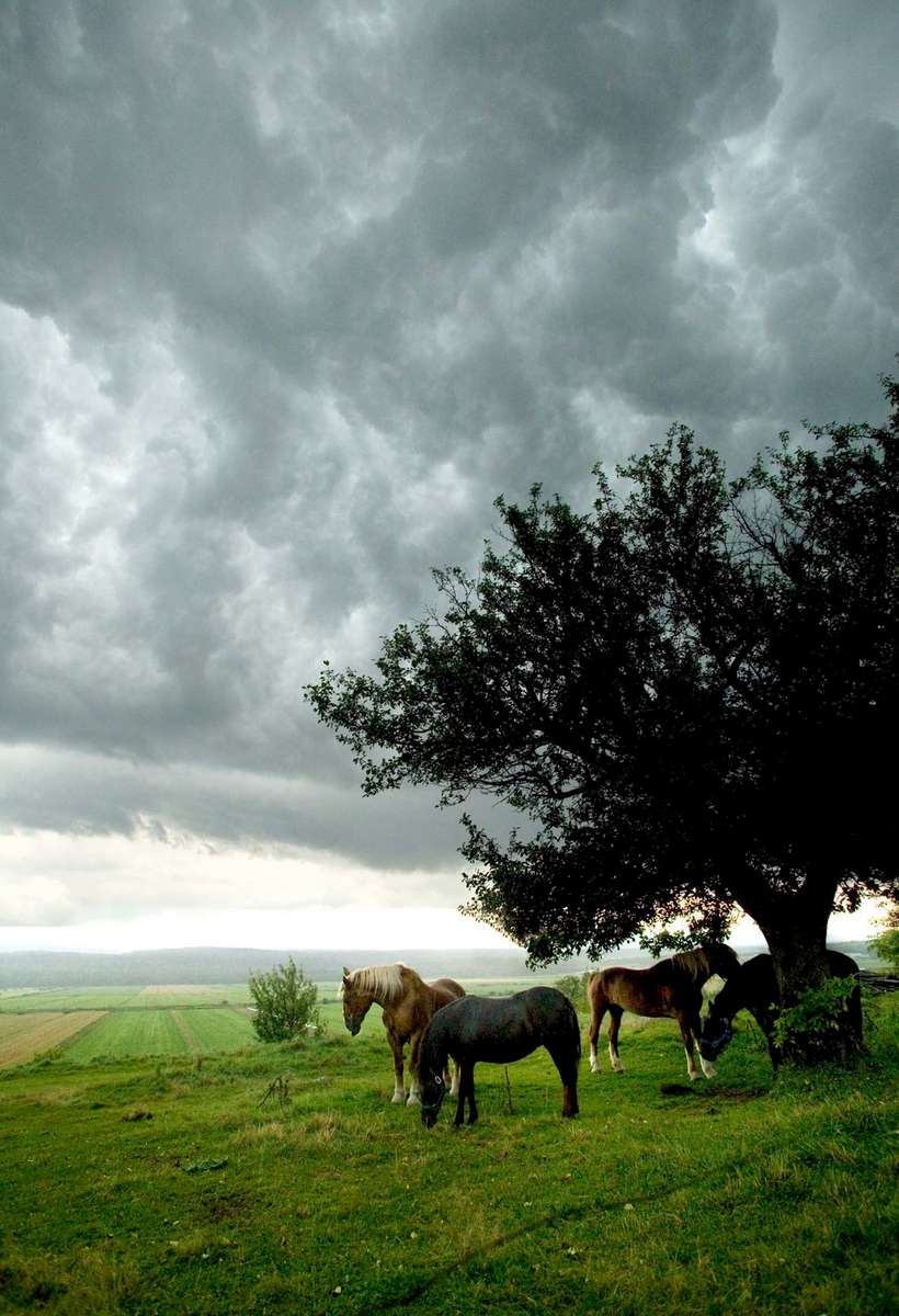 horse-pasture-storm