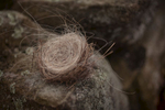 nest-hair-nature