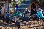 piglet-kids-farm