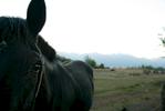 skinny-black-horse