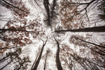 trees-sky-farm
