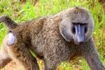 thumb_Kelly---Kenya-132_1024