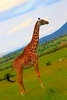 thumb_Kelly---Kenya-205_1024