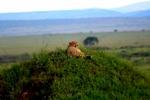 thumb_Kelly---Kenya-339-_2__1024