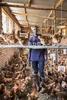 Chicken cooperative, Rural Rwanda