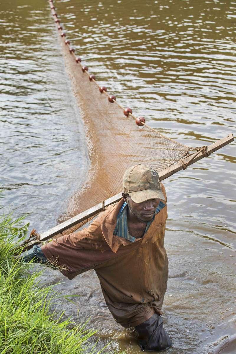 Tilapia pond farmer, Rwanda