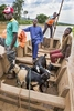 Ferry boat across the Nyabarongo River, Rwanda