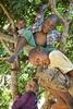 Kids in a Tree, Uganda