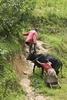 Reluctant cow, Rwanda