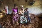 Peanut harvest, Malawi